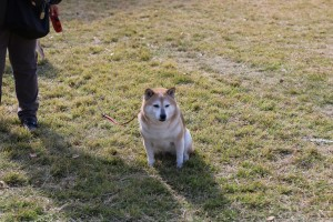 公園の犬1