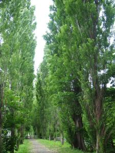2014.07.15 ガーデン巡り:北大